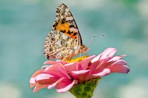 butterfly-4392735__340